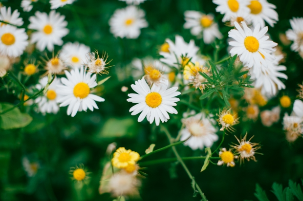 unsplash wildflowers
